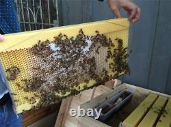 Nouvelle Boîte D'apiculture De Super Couvée De Cèdre Avec Le Cadre Auto Coulant De Ruche De Miel De 7pcs